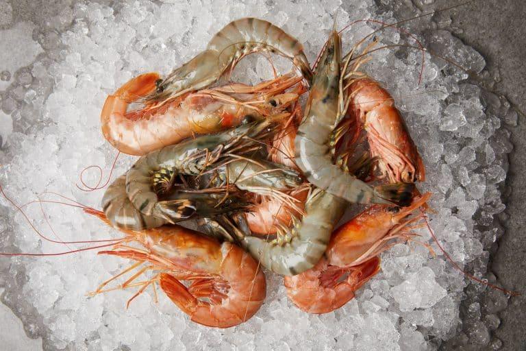 freshwater prawn versus tiger prawn