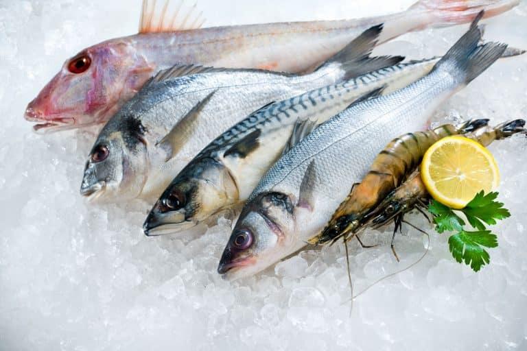 senangin fish